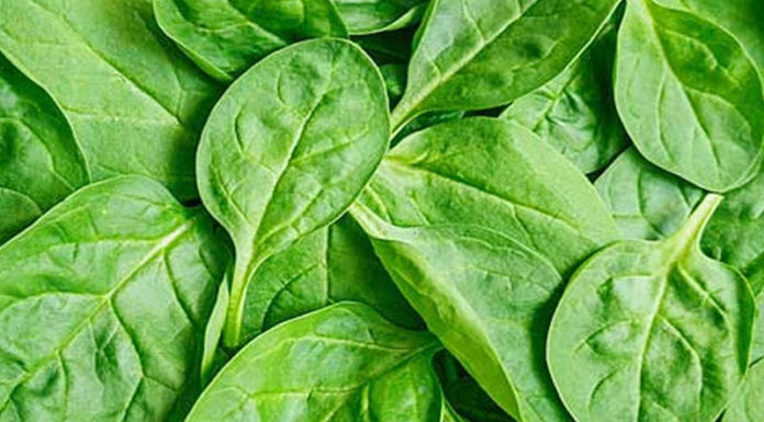Spinach Health Benefits - It is a great home remedy for many imbalances in the body. It contains many vitamins and minerals required for the body.